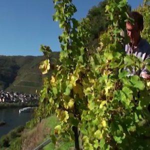 1.Kako da probate vino.00_06_39_10.Still040